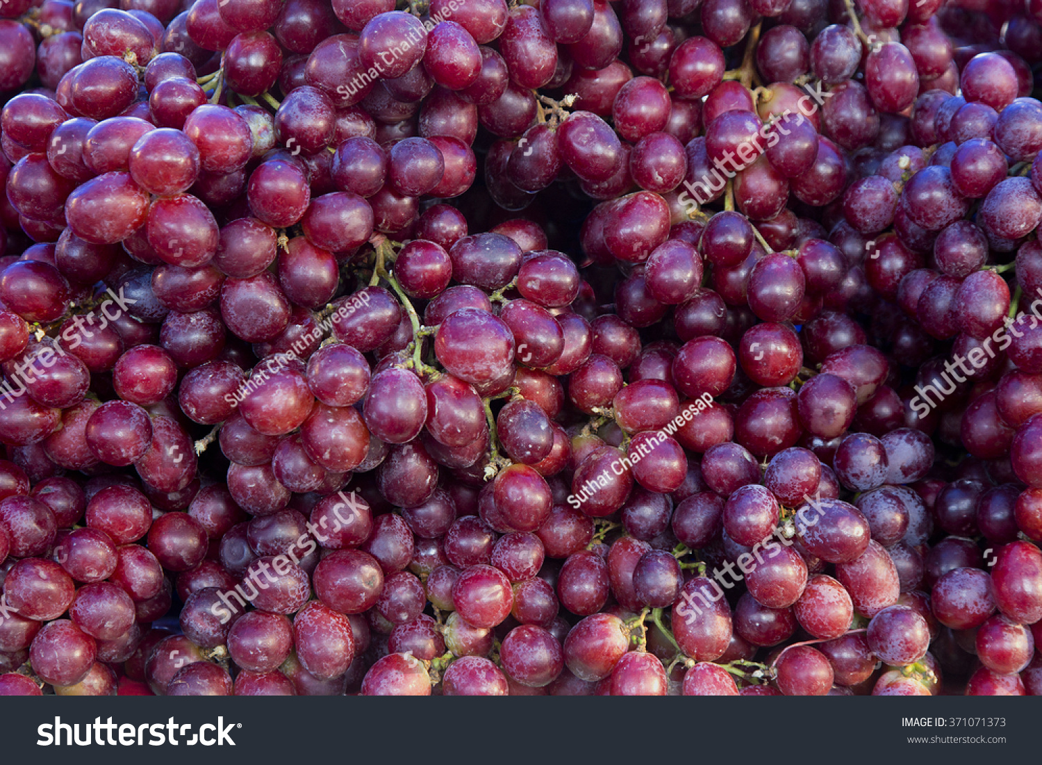 Red Wine Grapes Background Dark Grapes Stock Photo ...