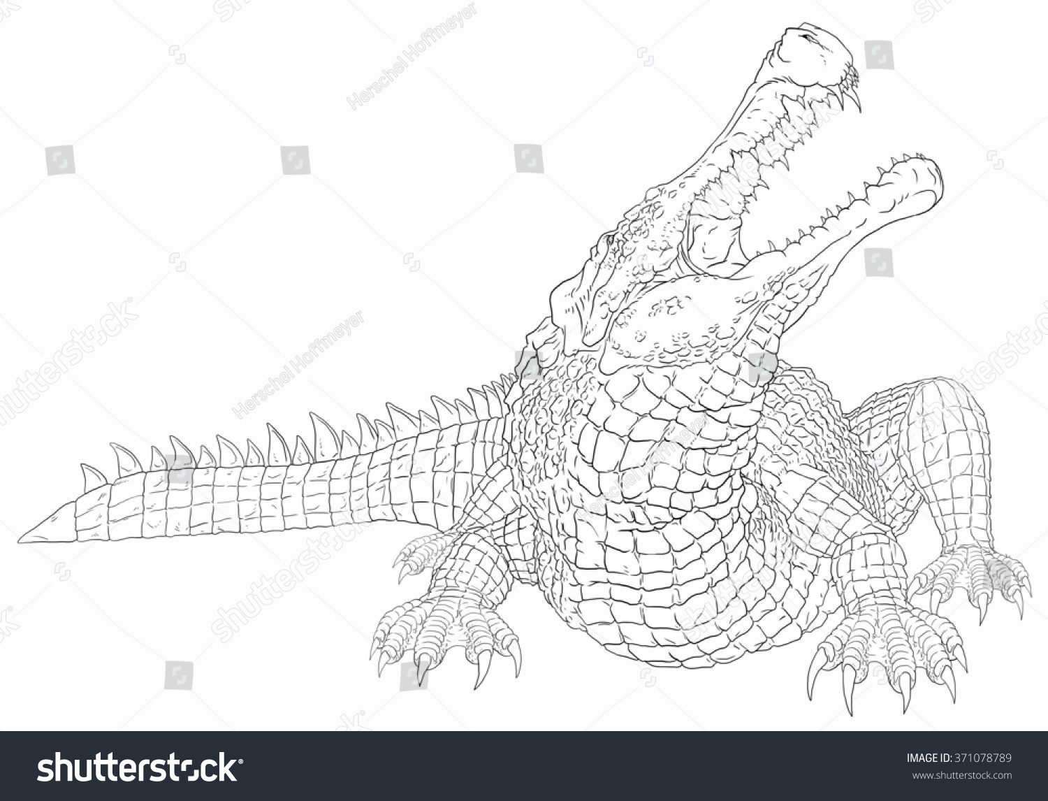 Sarcosuchus line drawing coloring books illustration libre for Carcharodontosaurus coloring page
