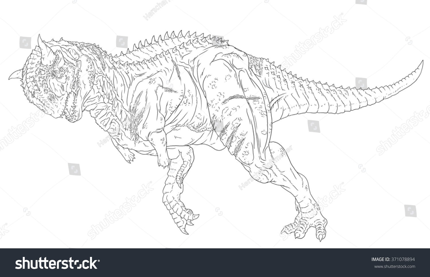 Carnotaurus line drawing coloring books stock illustration for Carcharodontosaurus coloring page