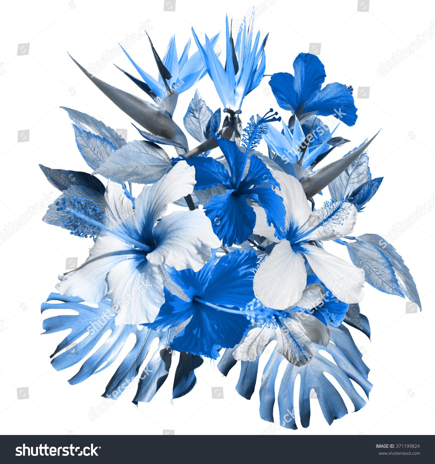 Blue Tropical Flowers Hibiscus Flowers Strelitzia Stock Illustration