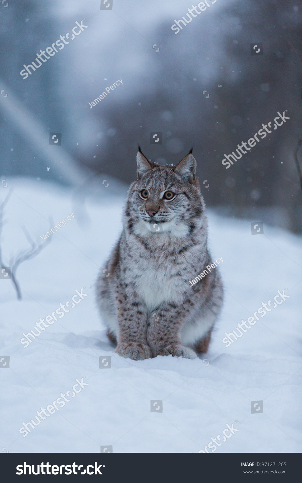 Snow Cat - Cats & Animals Background Wallpapers on Desktop ... |Winter Scenes With Cats