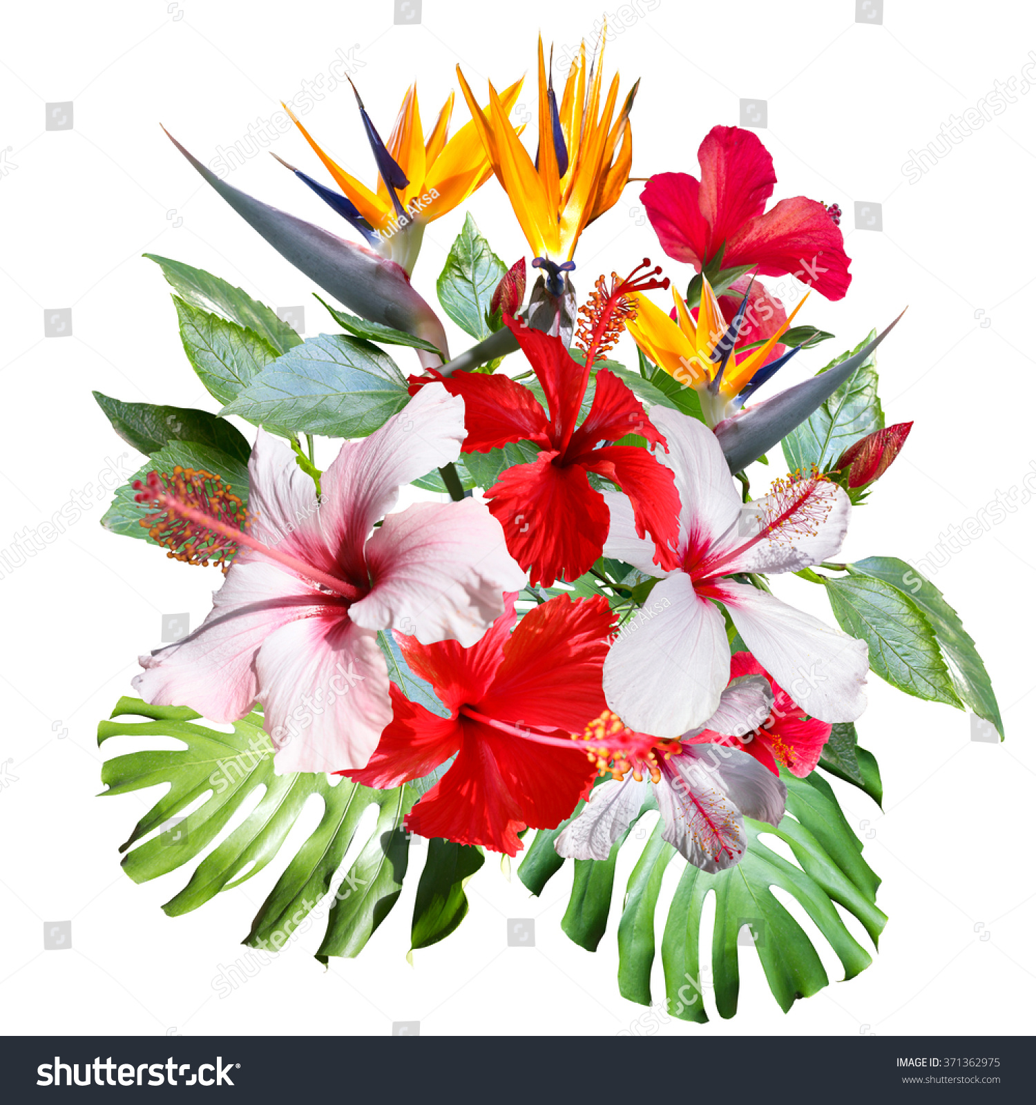Clip Art Collage Beautiful White Tropical Flowers Hibiscus Close