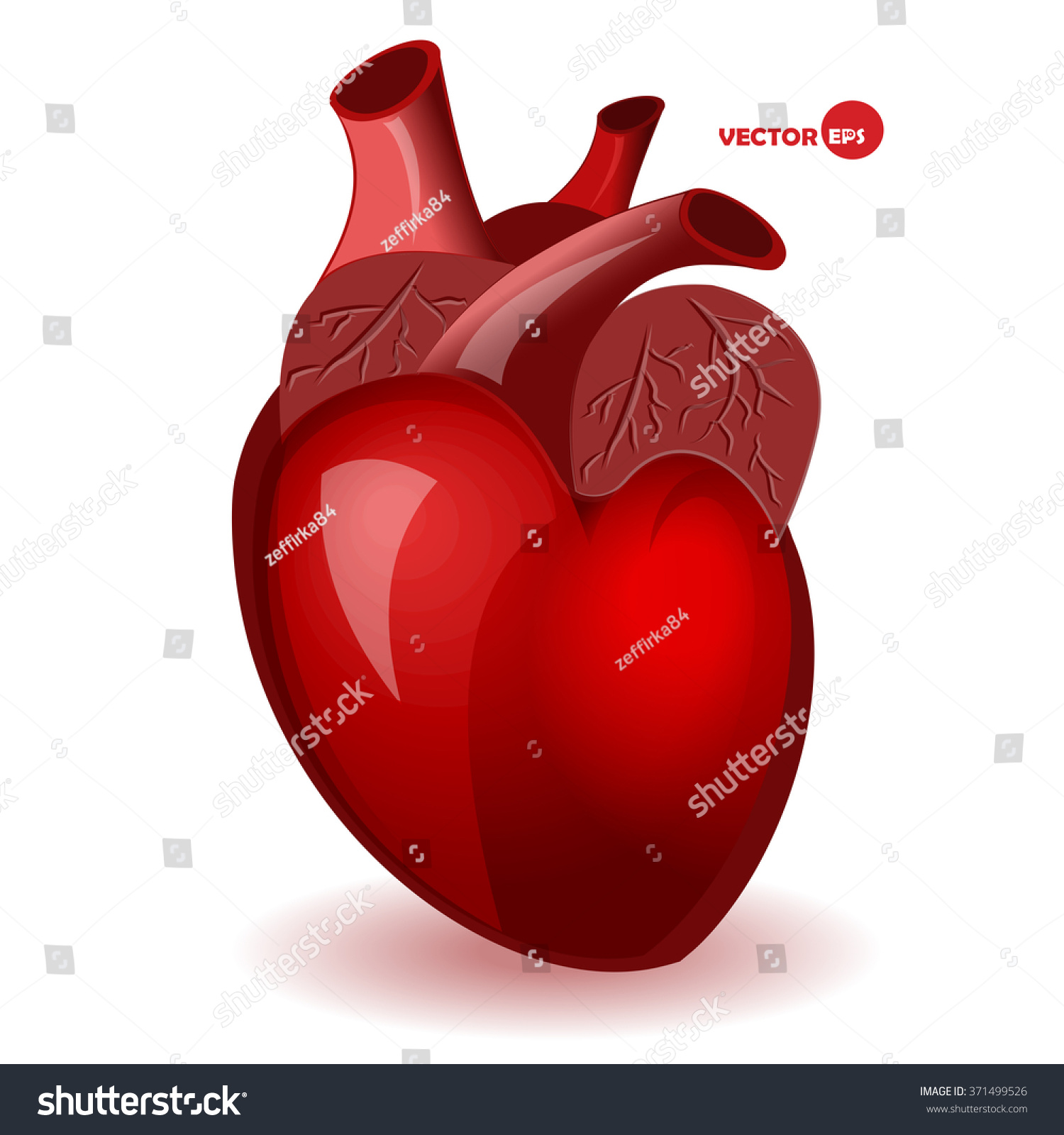 Body Heart Veins Simple Comic Style Stock Vector Royalty Free