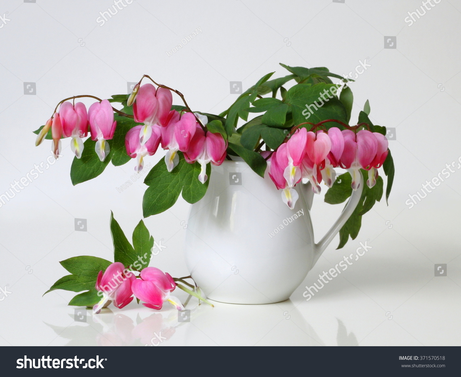 Bouquet pink bleeding heart flowers vase stock photo safe to use bouquet of pink bleeding heart flowers in a vase romantic floral still life with bouquet izmirmasajfo