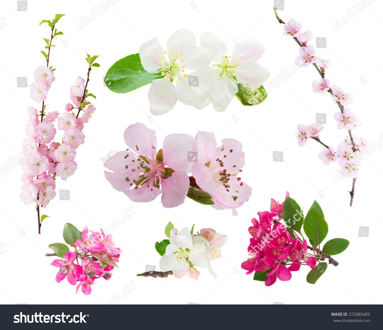 Spring Flowers Set Fresh Flowers Tree Stock Photo Edit Now