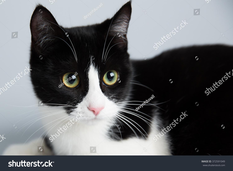 Adorable Cute Black White Cat Stock Photo Edit Now 372591049