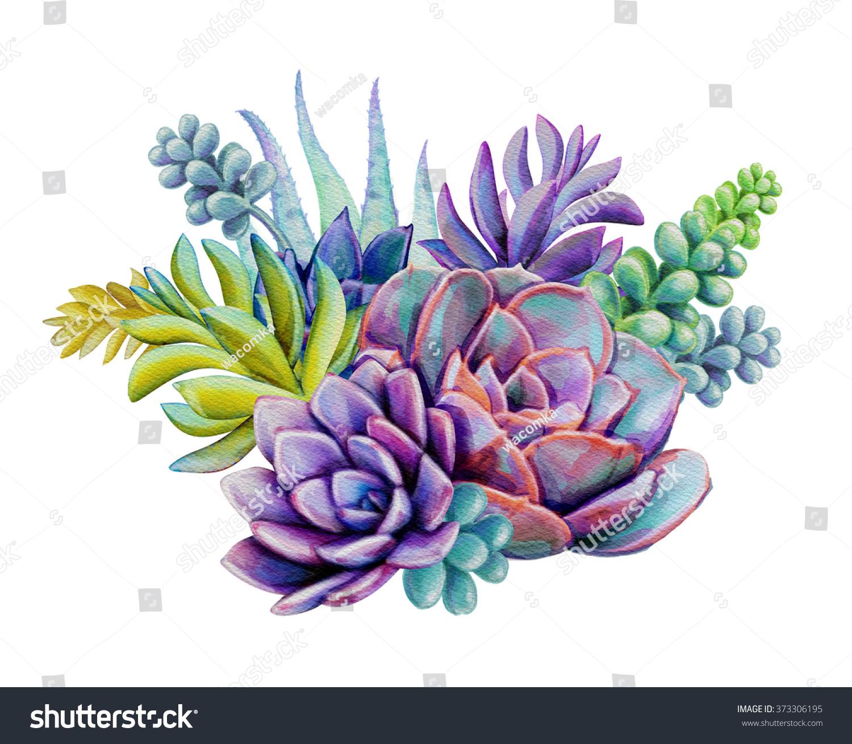 Watercolor Succulent Plants Composition Floral Bouquet Stock Illustration 373306195