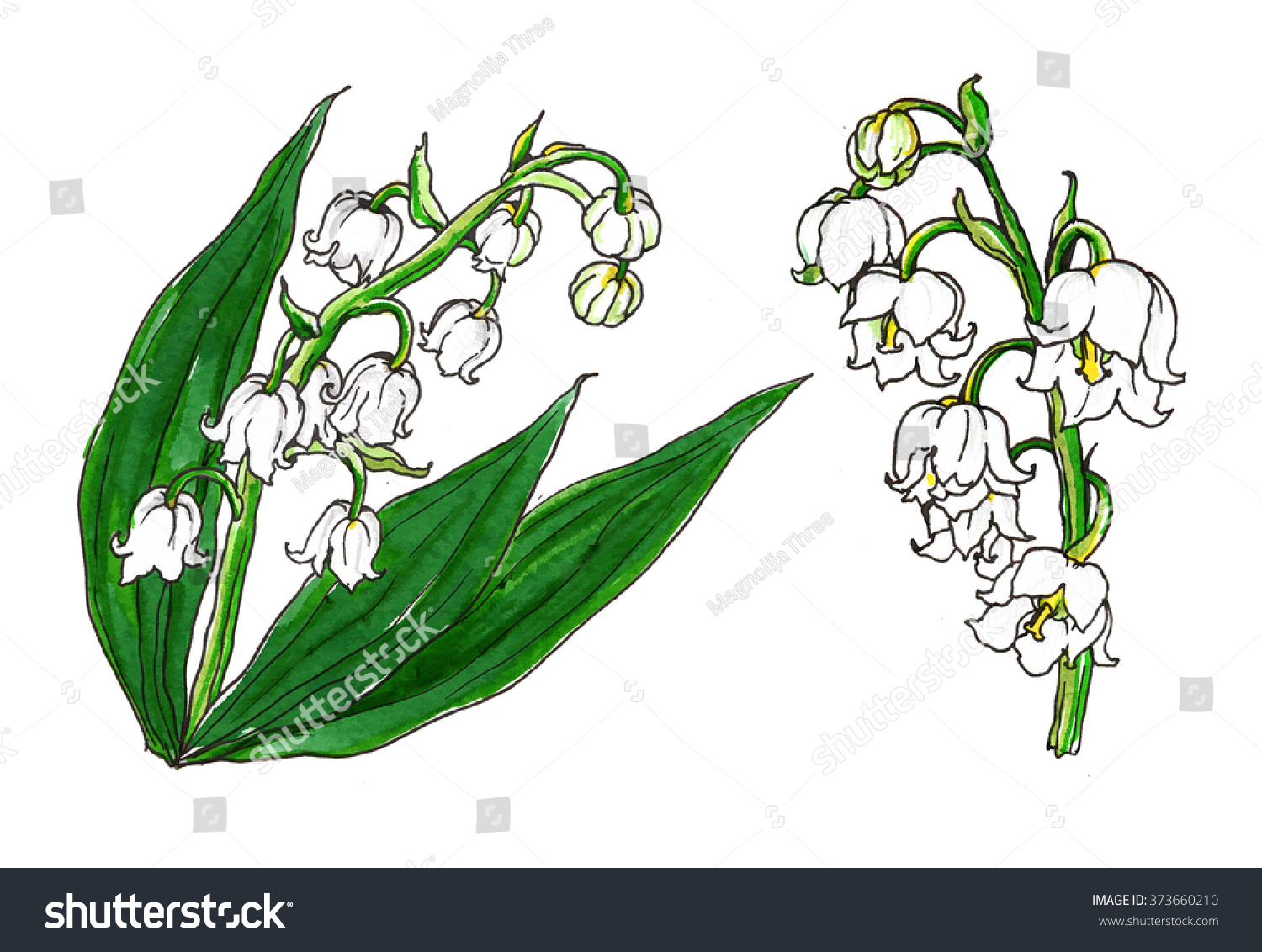 White Lily Valley Spring Flowers Wedding Stock Illustration