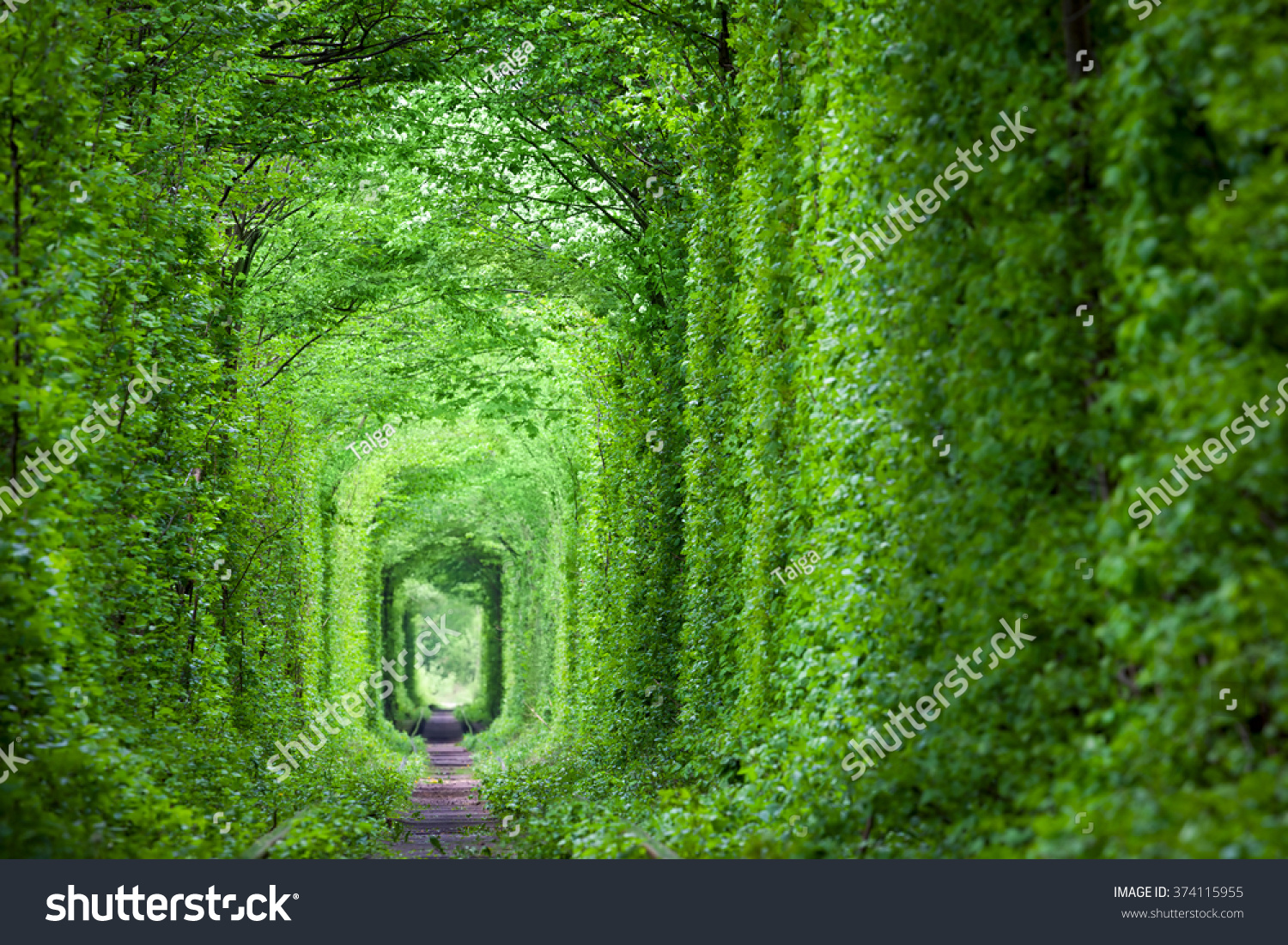wonder nature real tunnel love green stock photo edit now