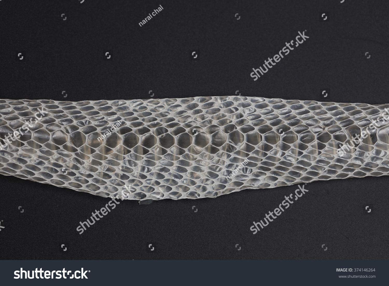 Rattlesnake Skin Snake Shedding Skin Stock Photo