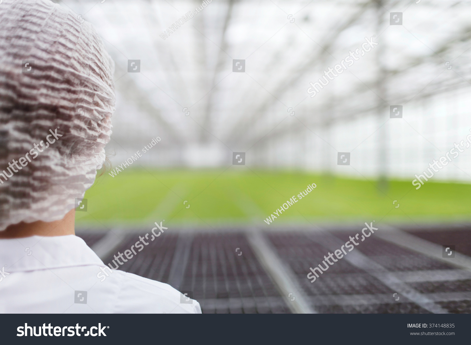 Close-up back portrait biotechnology woman engineer examining a plants for disease from greenhouse farm Quality control eaf for disease