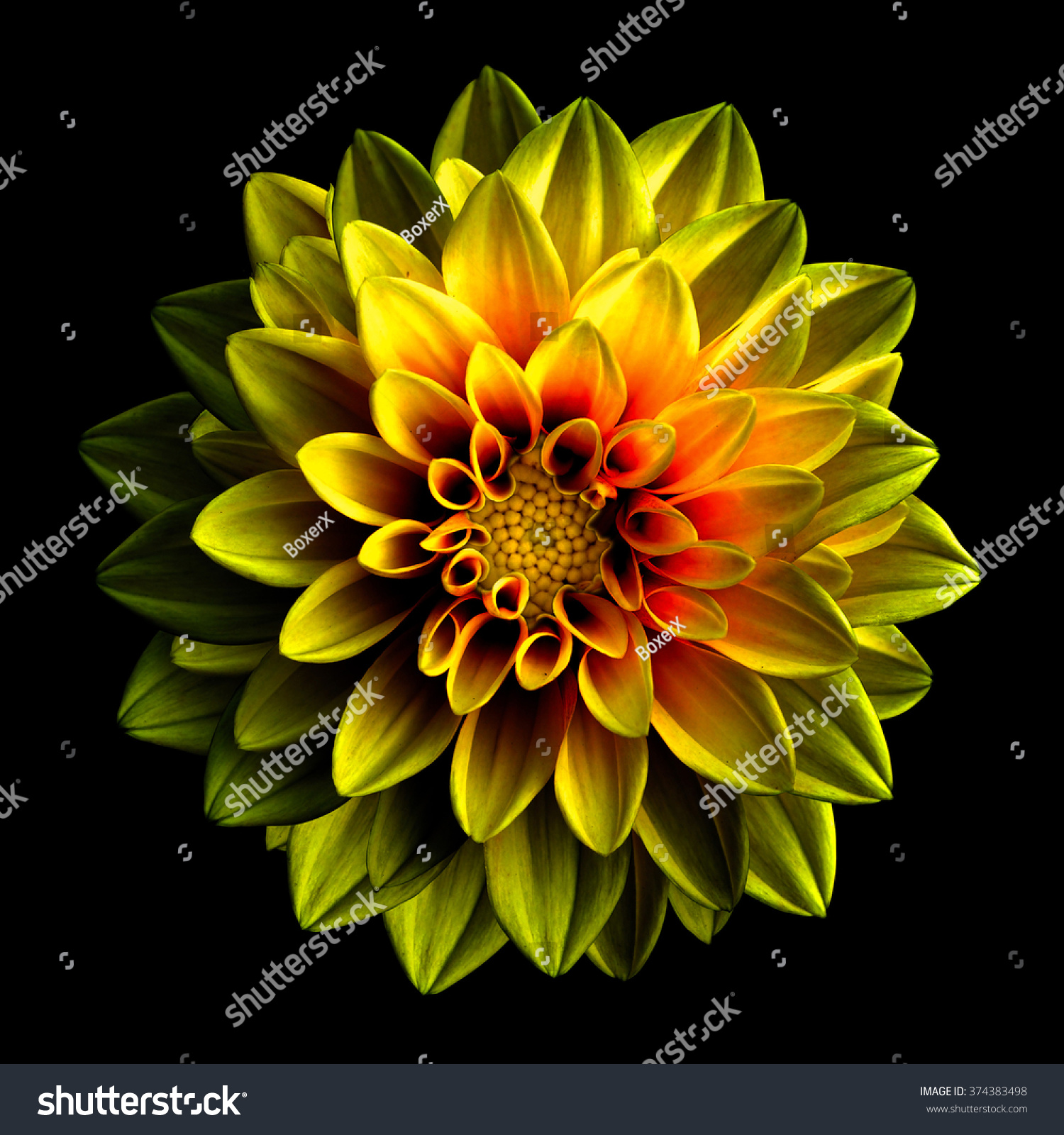 Surreal Dark Chrome Yellow Red Flower Stock Photo Edit Now