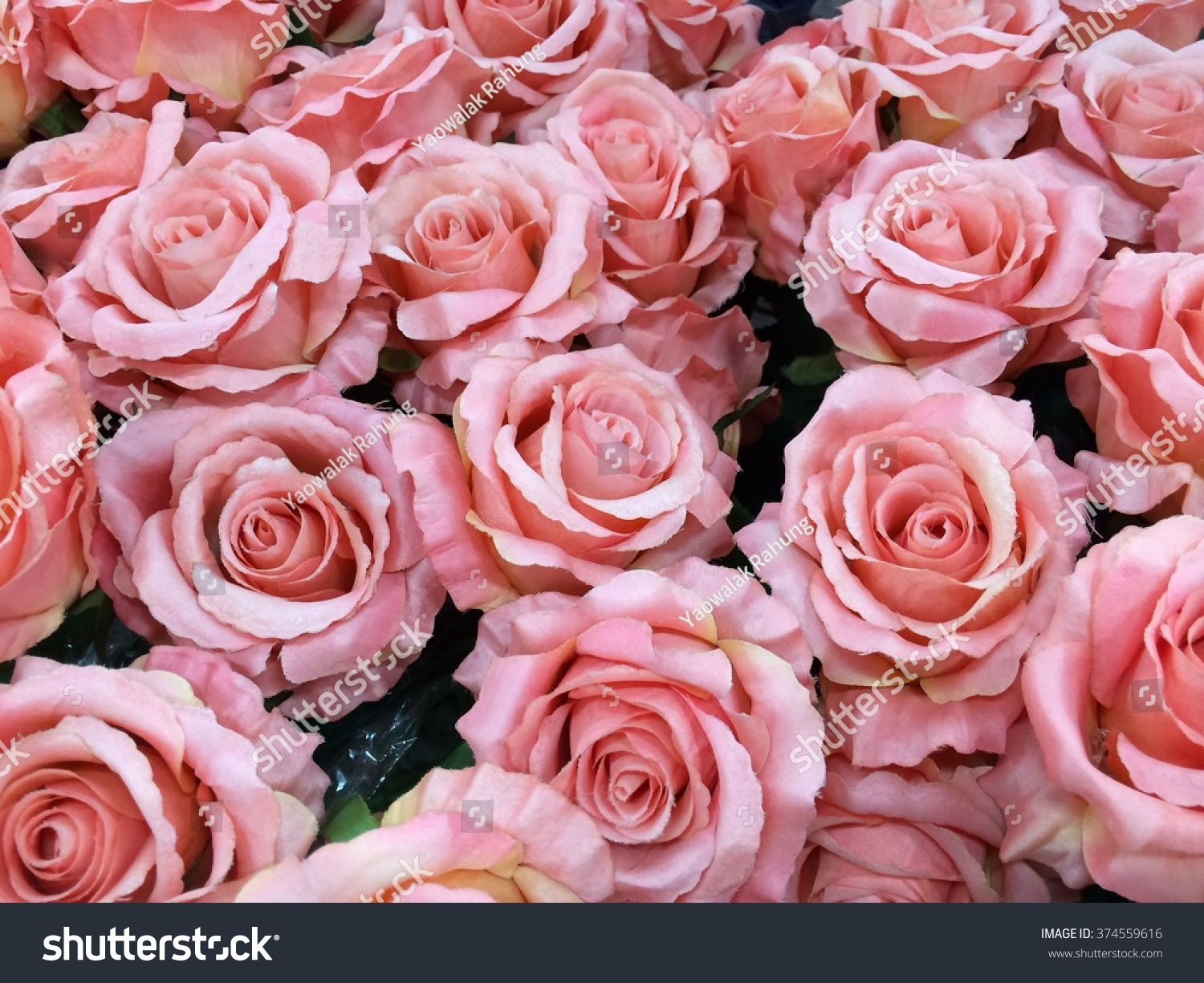 Roses Pale Pink Flowers Beautifully Put Stock Photo Edit Now