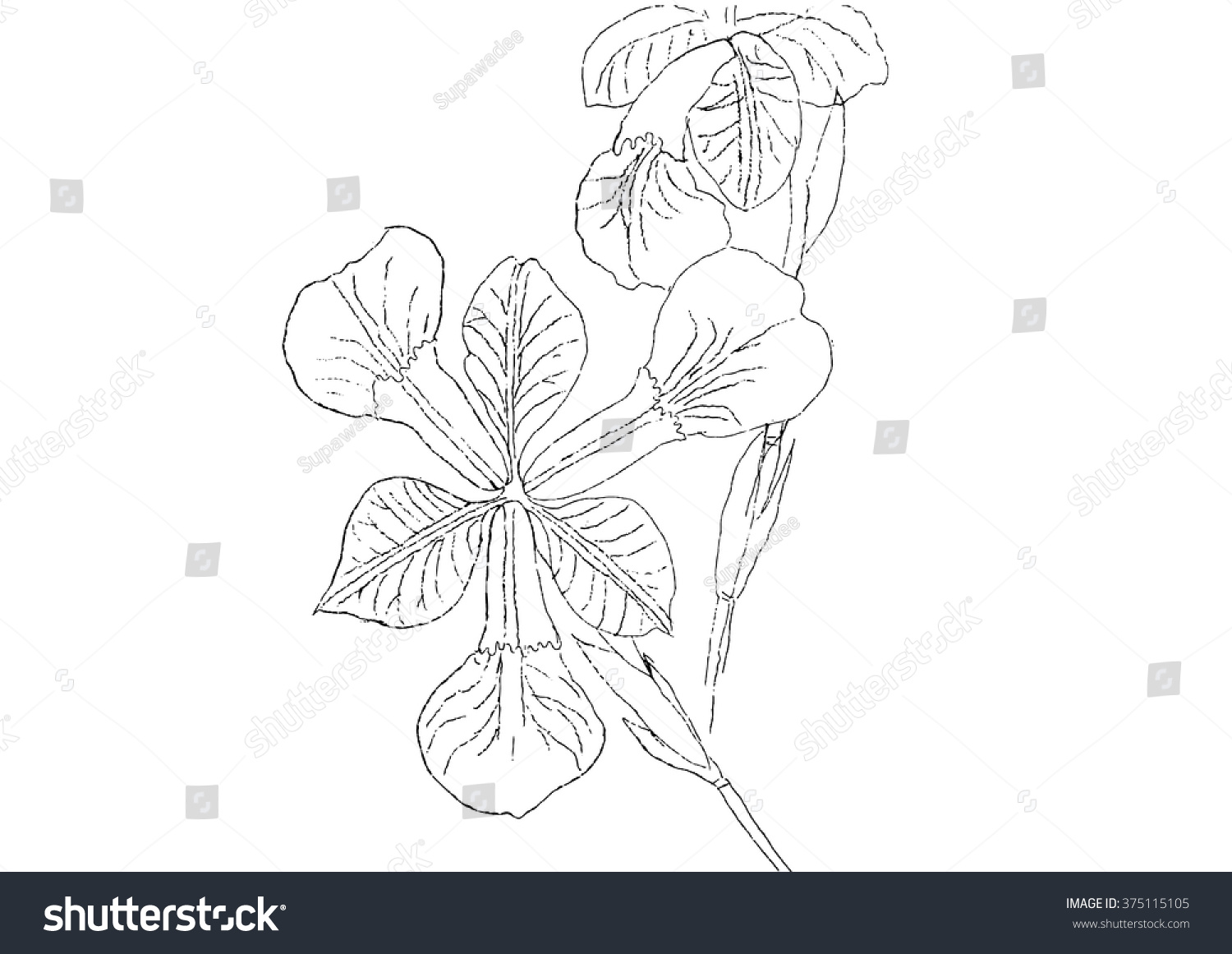 Line Art Flower Drawing : Iris flower line drawing back vector stock photo