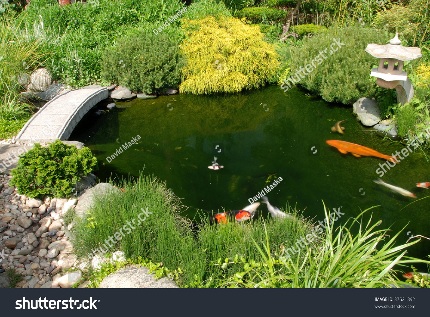 Koi fish in a pond of a beautiful japanese garden stock for Japanese garden san jose koi fish