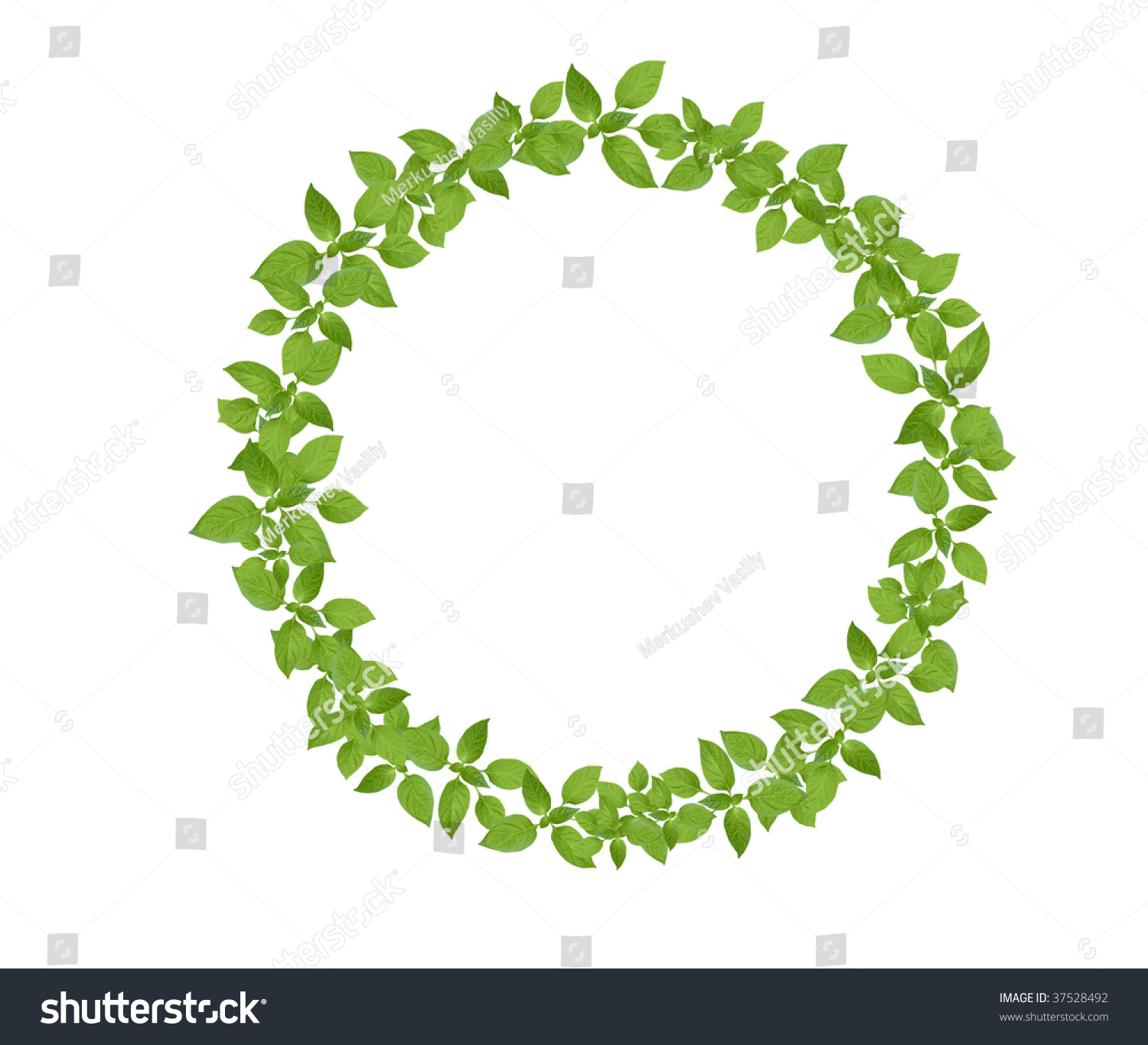 Floral design in circle stock vector image 75615991 - Green Leaves Circle