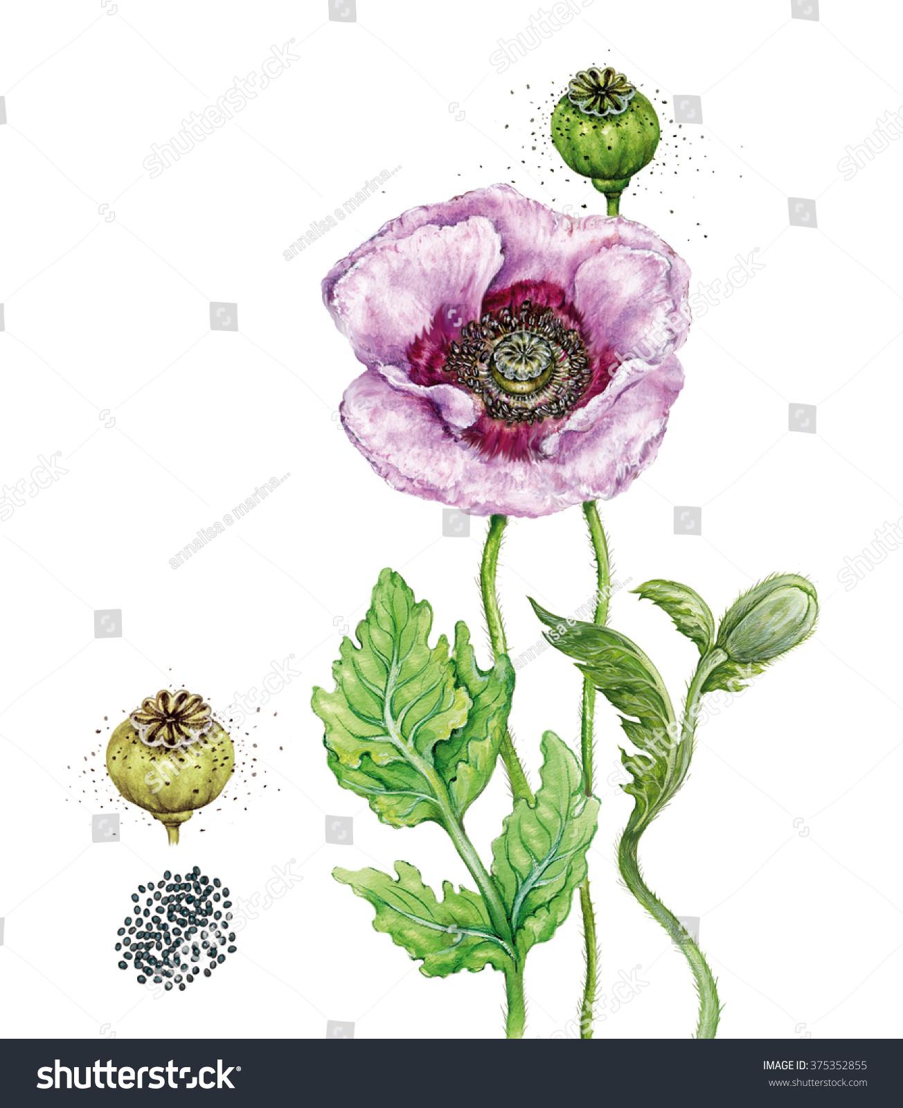 Opium Art Realistic Botan...