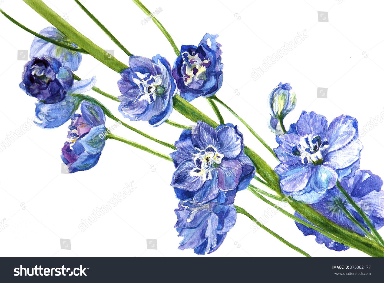 Watercolor Delphinium Flower On White Background Stock Illustration