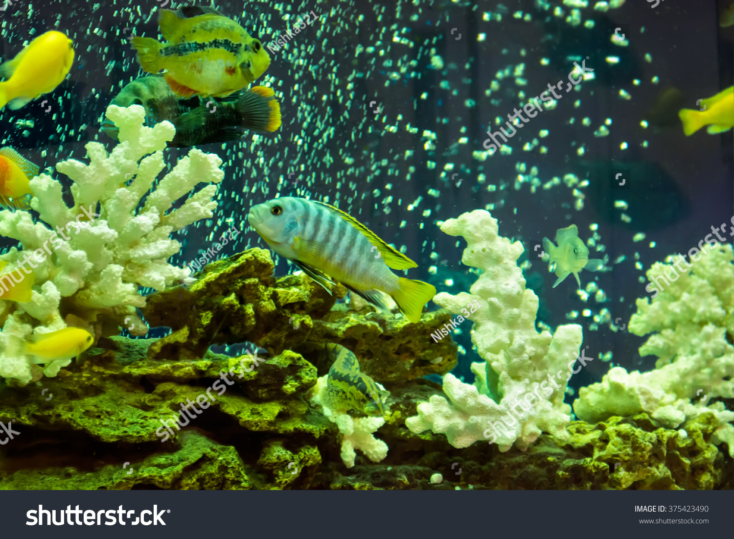Beautiful View Aquarium Colorful Fishes Stock Photo (Royalty Free ...