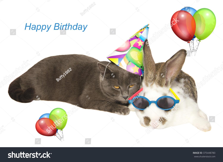 Happy Birthday Card Funny Cat Bunny Photo 375448780 – Humorous Cat Birthday Cards