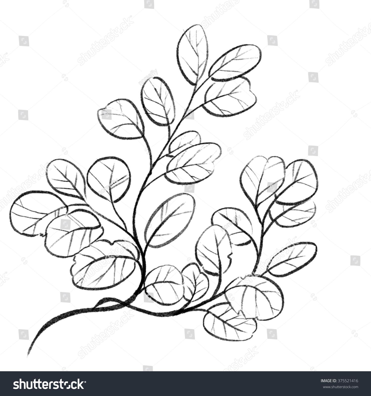 Leaves pencil sketch outline
