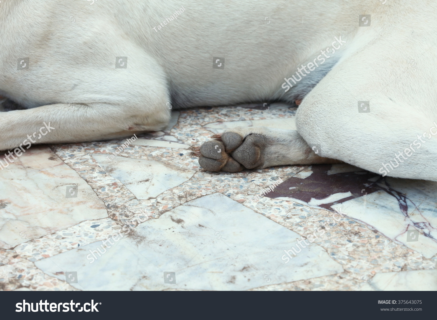 Dog Foot Pad Area Among Outdoor Stock Photo (Royalty Free) 375643075 ...