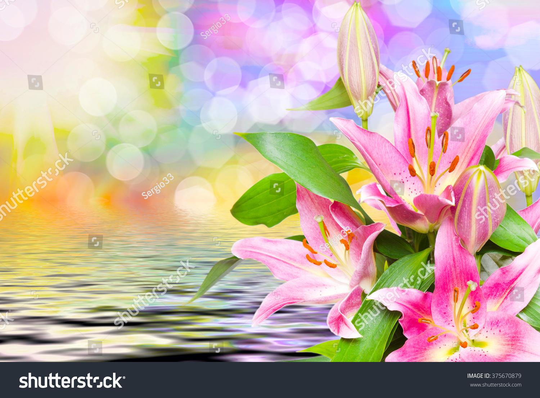 Close up of beautiful pink lilies flowers ez canvas id 375670879 izmirmasajfo