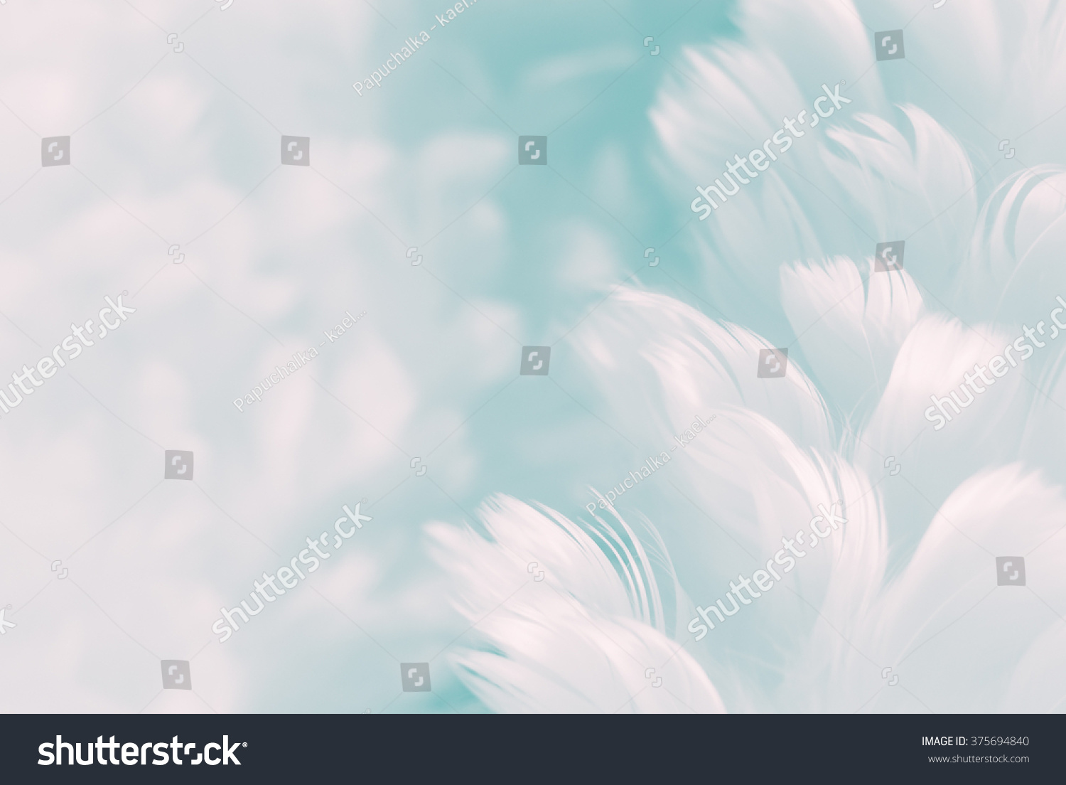 White fluffy feathers on pale teal stock photo 375694840 for Colour trend wallpaper
