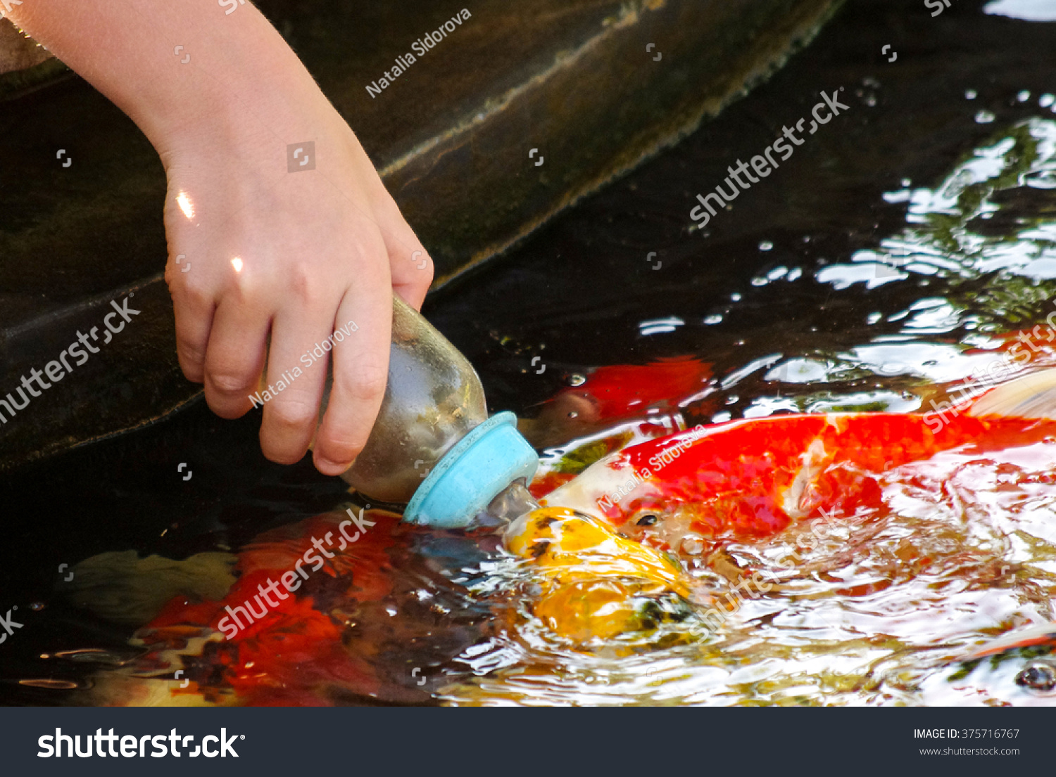 Feeding koi from a baby 39 s bottle in huahin safari park for What to feed baby koi
