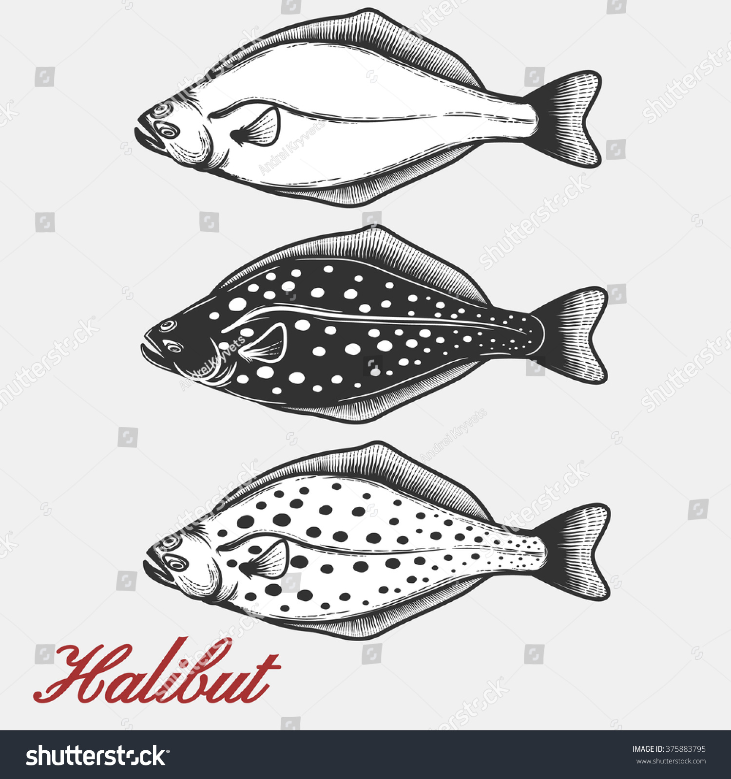 Halibut Silhouette For Your Design. Stock Vector ...