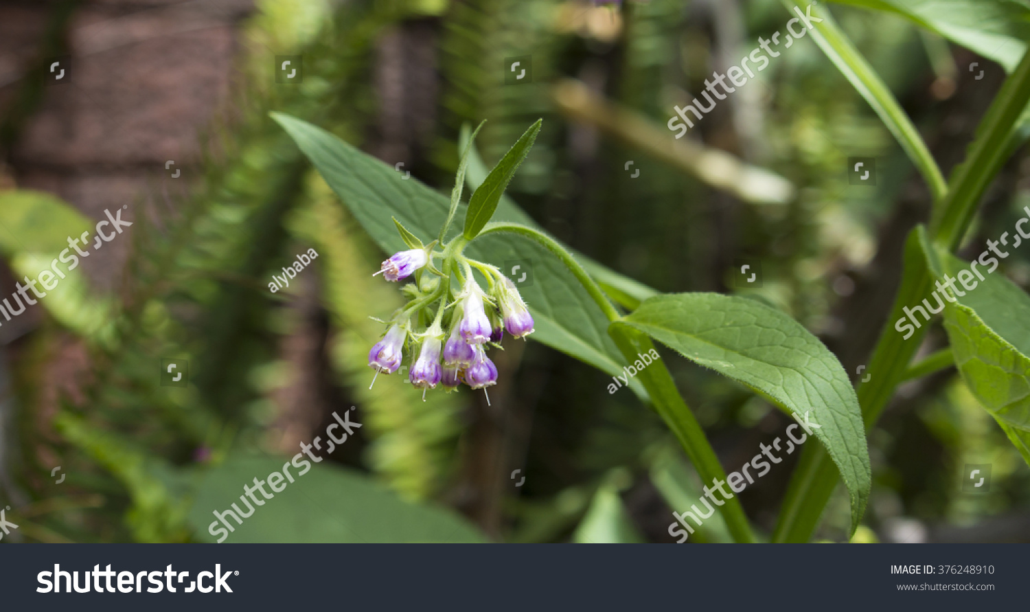Delicate Mauve White Bell Shaped Flowers Stock Photo Royalty Free