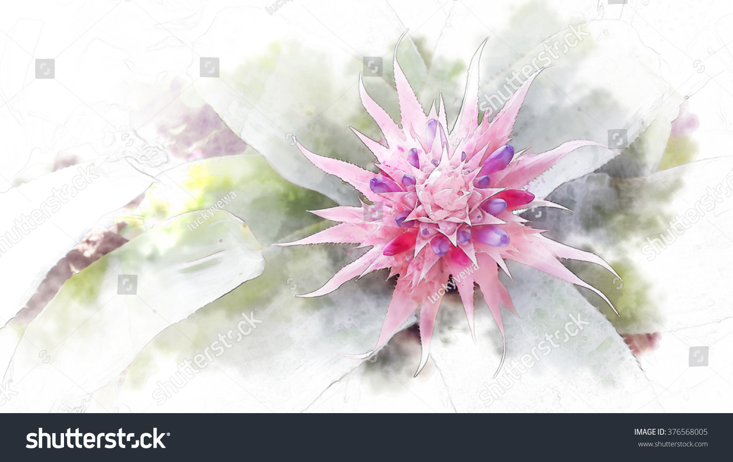 Bromeliad Pink Flower Watercolor Techniques Stock Illustration