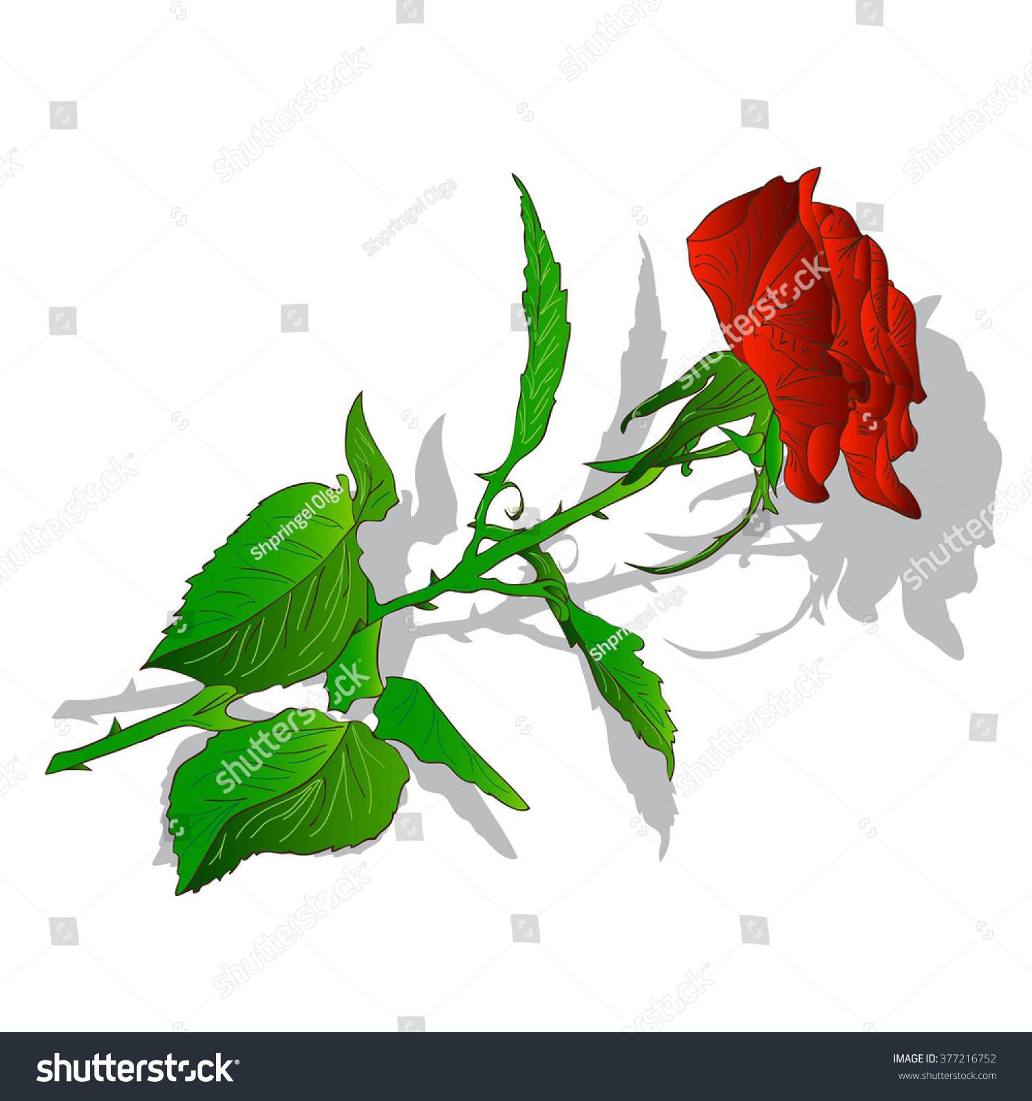 Beautiful flower red rose isolated on stock illustration 377216752 beautiful flower red rose isolated on stock illustration 377216752 shutterstock izmirmasajfo