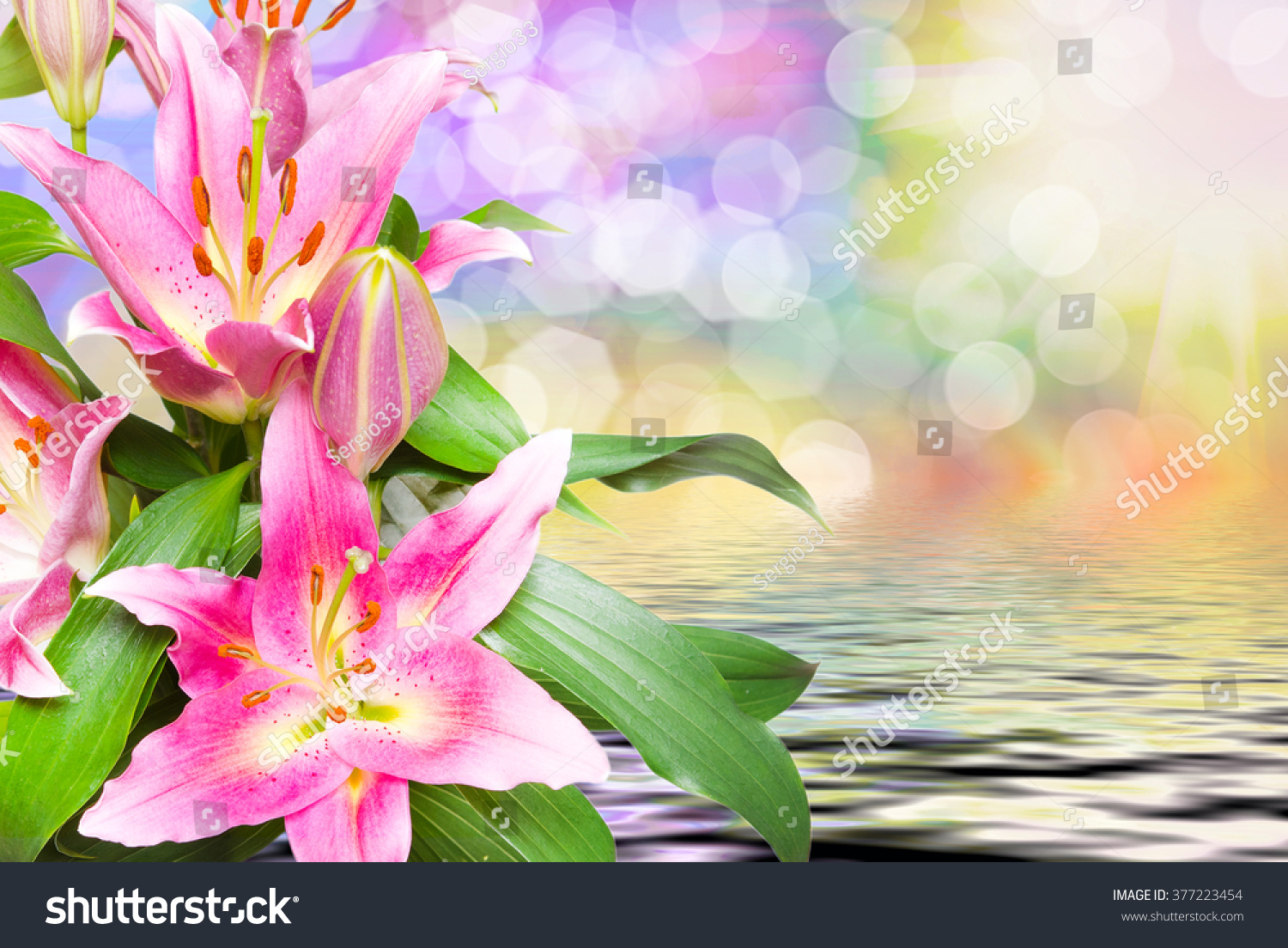 Close up of beautiful pink lilies flowers ez canvas izmirmasajfo