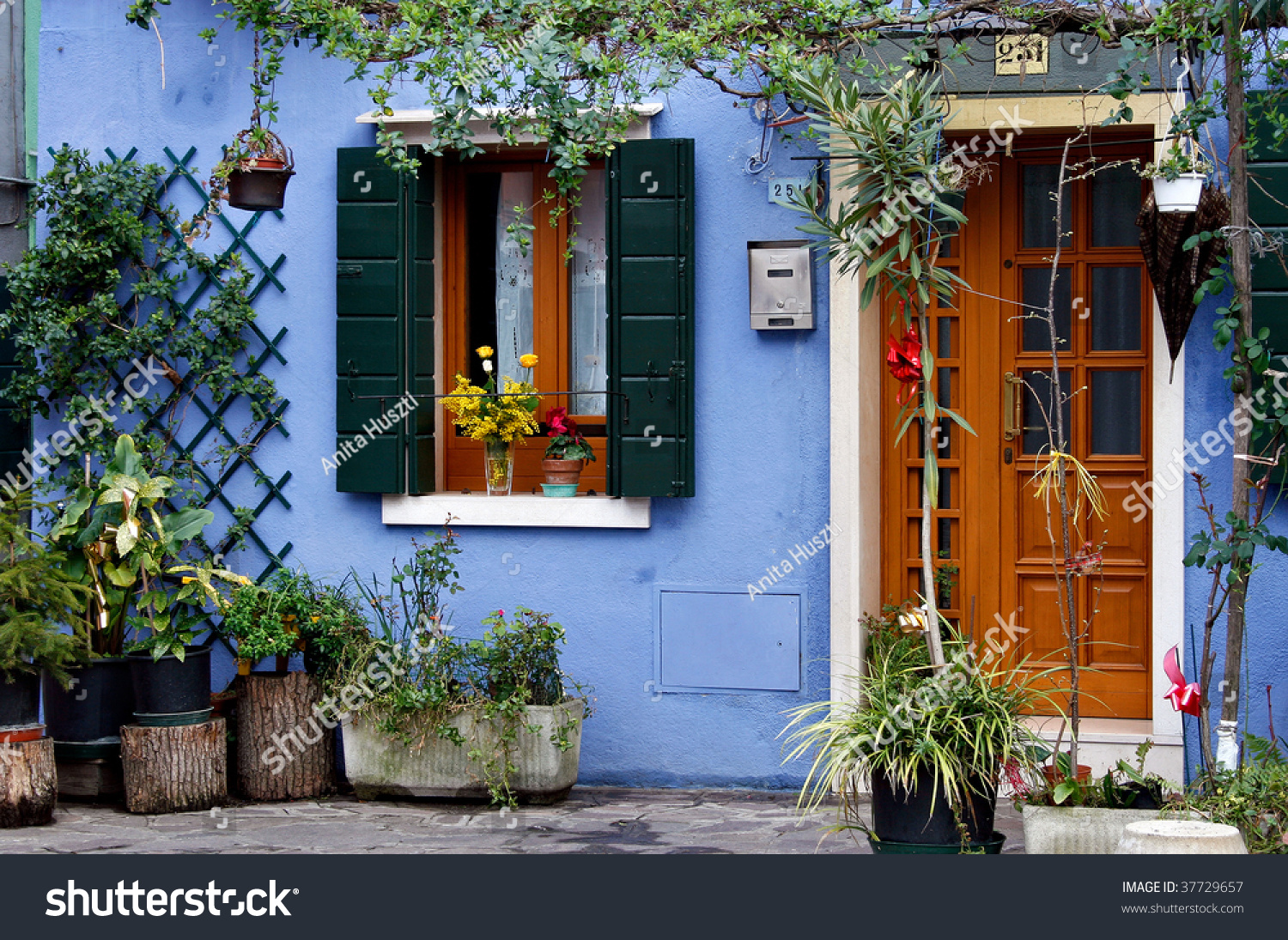 Blue house with lost of flowers in Burano Italy