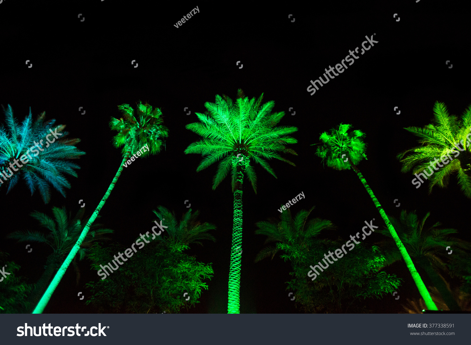 Green Led Palm Trees Night Miami colorful Stock Photo 377338591 ...