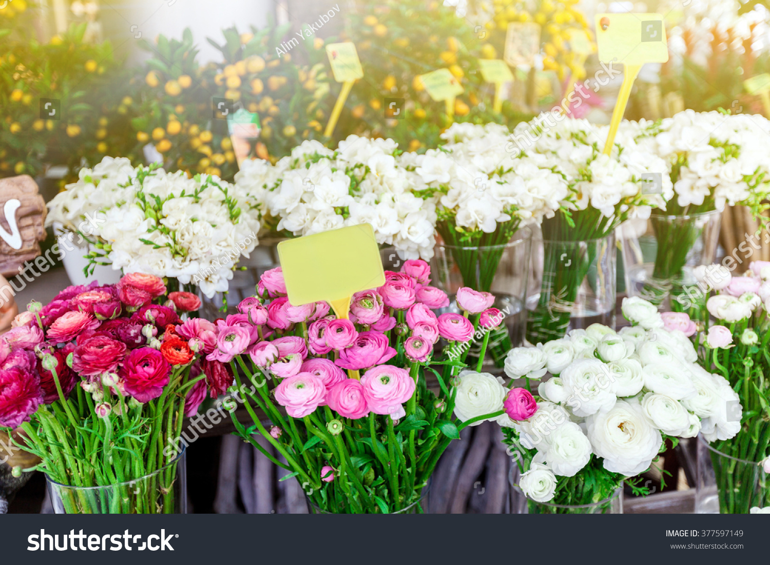 Beautiful colorful flowers flower shop stock photo edit now beautiful colorful flowers in flower shop izmirmasajfo