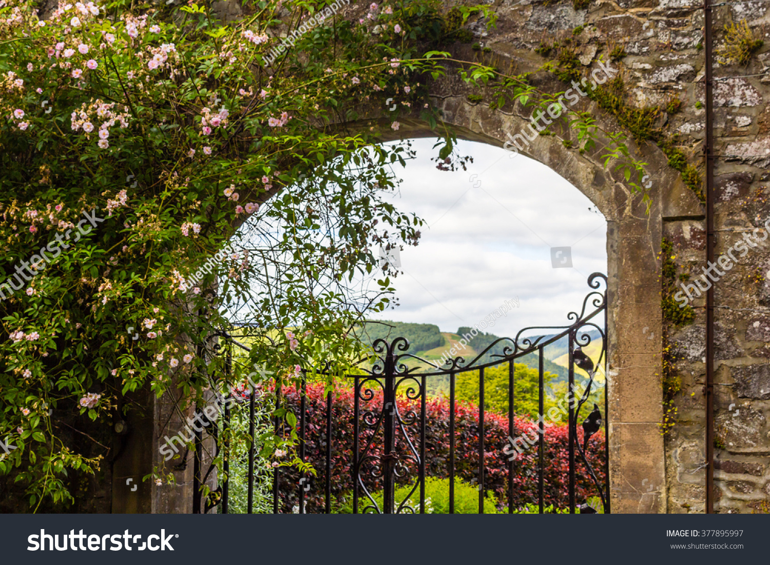 Lovely Beautiful, Old Garden Gate With Climbing Roses