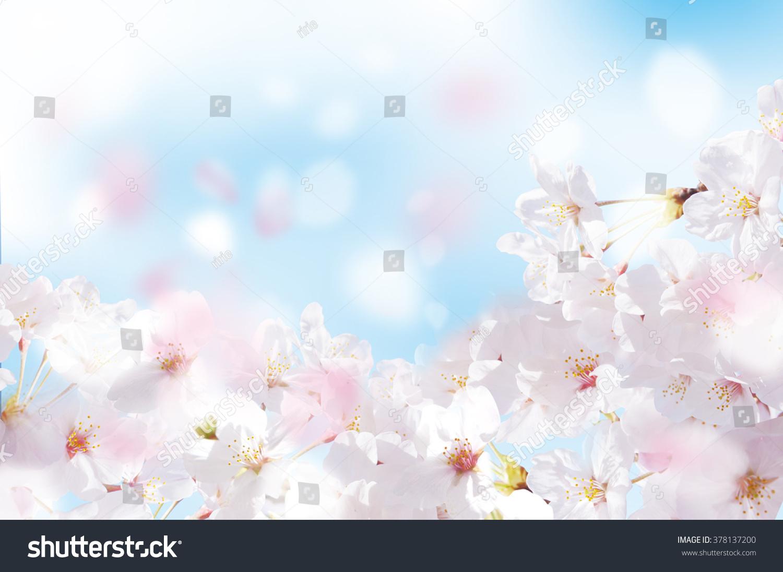 Beautiful cherry landscape #378137200