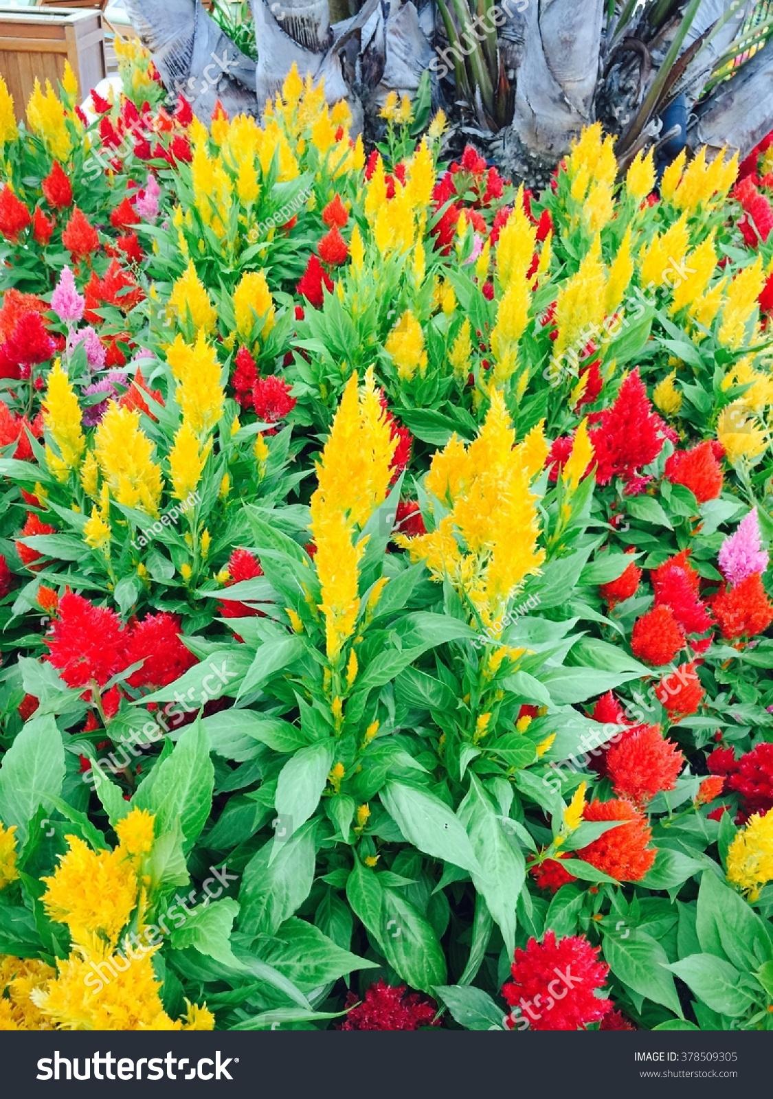 Beautiful natural flowers nature stock photo edit now 378509305 beautiful natural flowers in nature izmirmasajfo