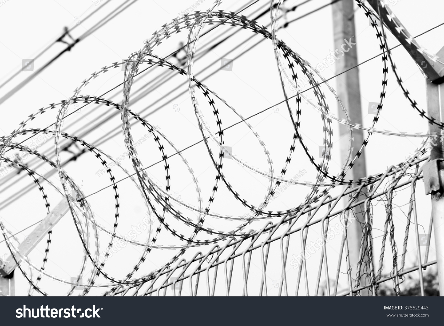 Old Fashioned Concertina Wire Surplus Picture Collection - Wiring ...