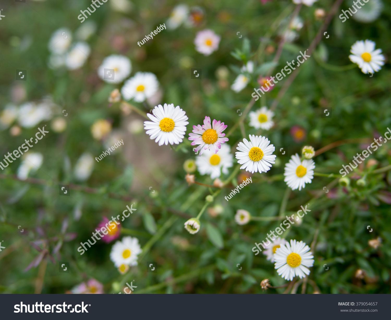 Tiny White Flowers Background Stock Photo Edit Now 379054657