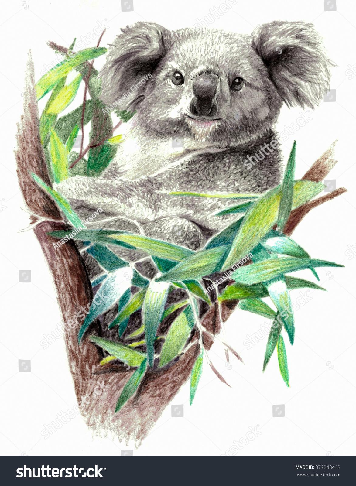 Color Sketch Koala Bear On Tree Stock Illustration 379248448 ...