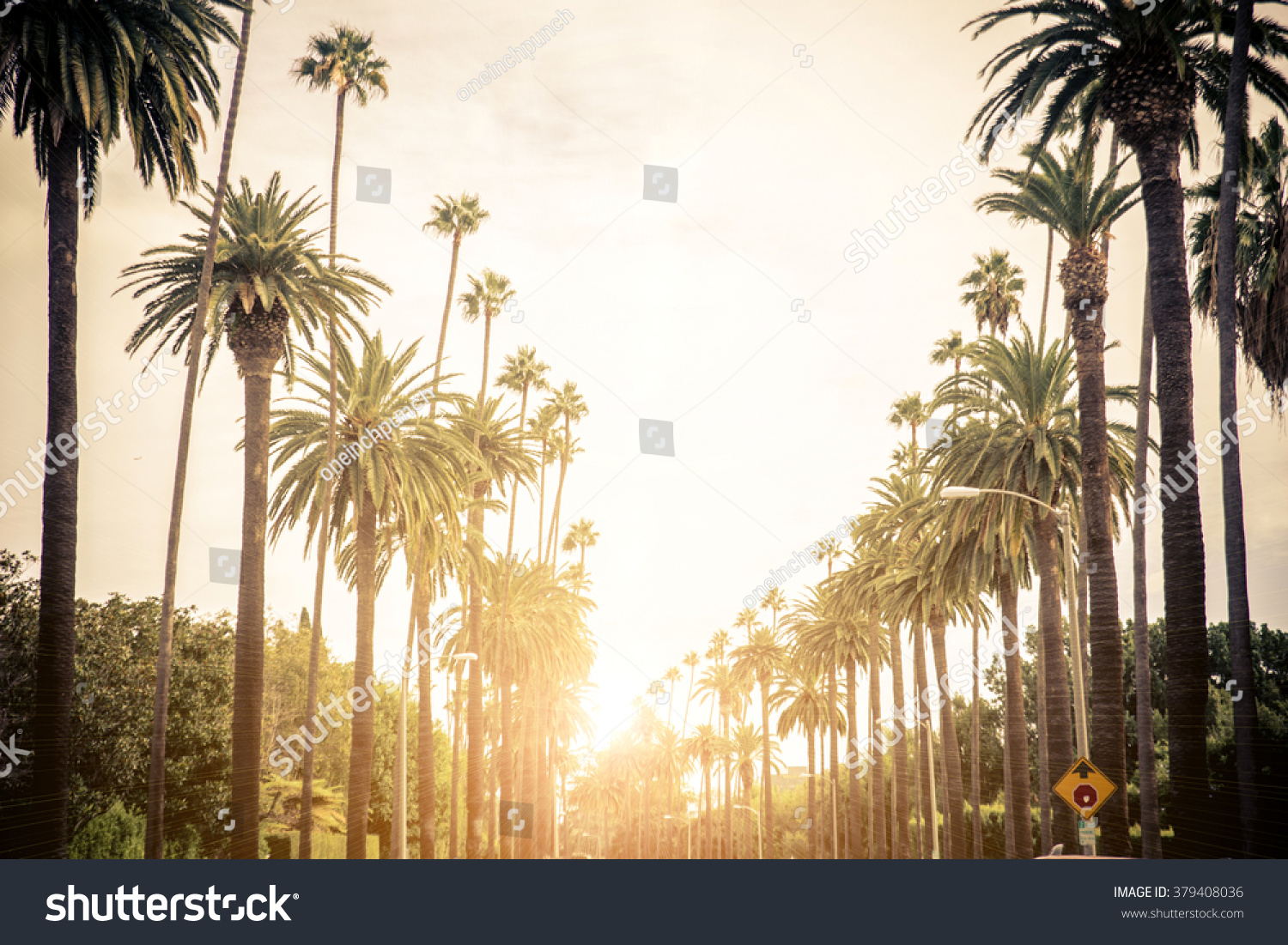 Beverly Hills street with palm trees at sunset, Los Angeles #379408036
