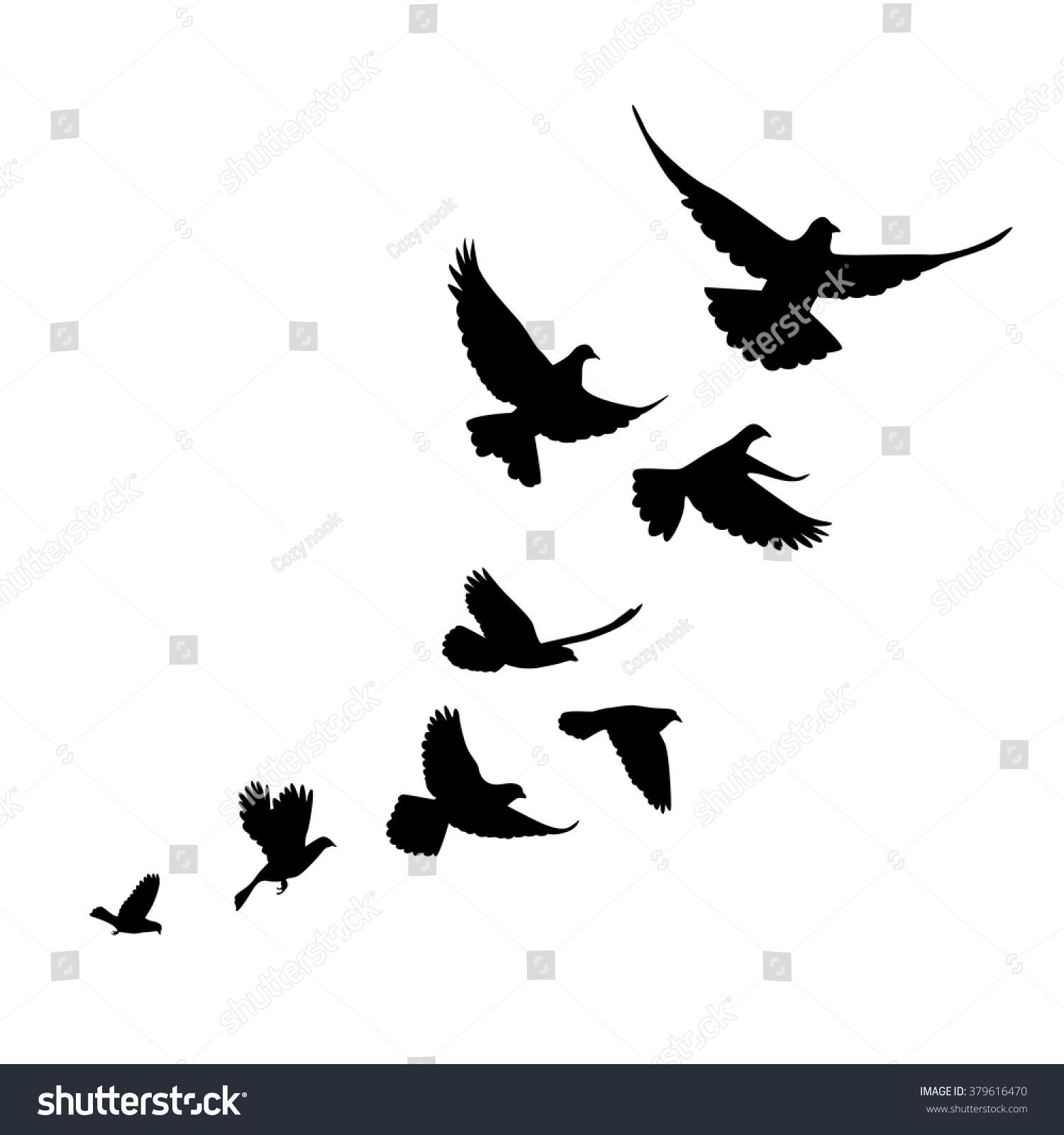 Flock Birds Pigeons Go...