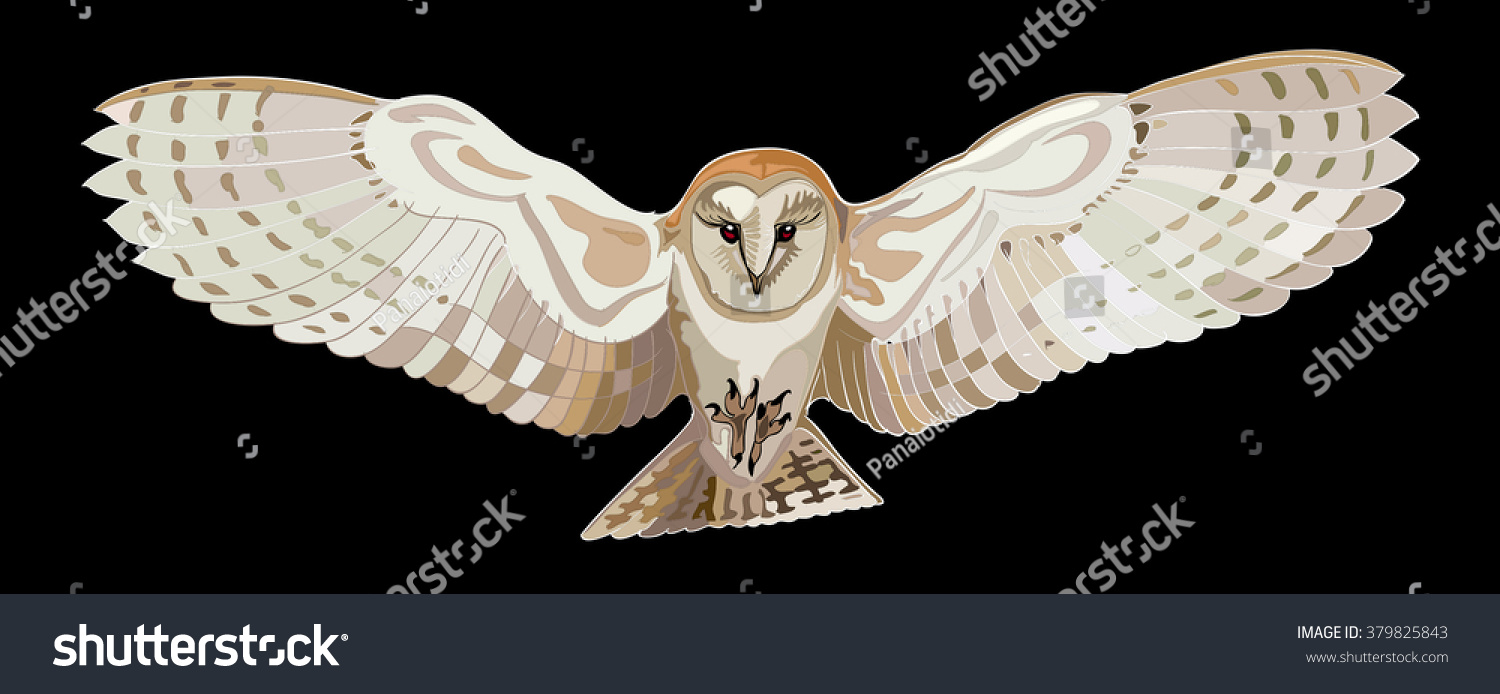 Flying Barn Owl Vector Image Stock Vector Royalty Free 379825843