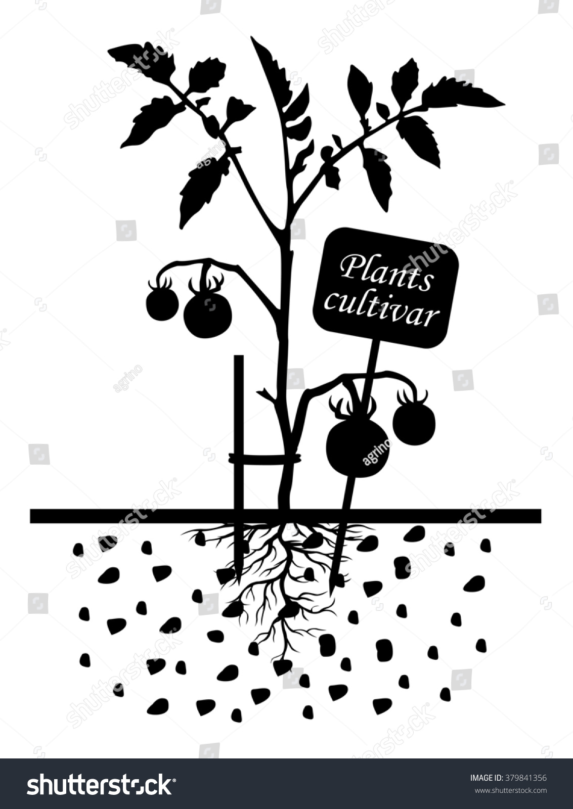 illustrations of Set of silhouettes of tomato plants with label cultivar