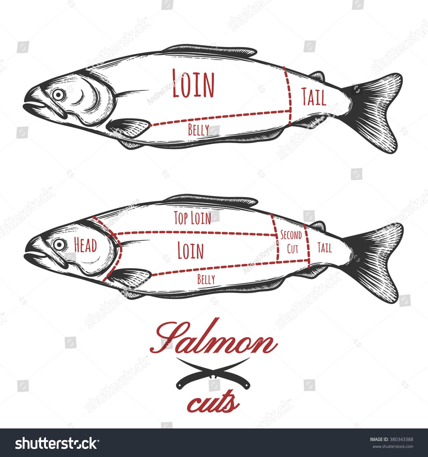 salmon cuts diagram