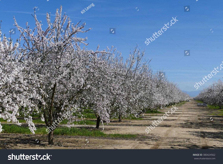 Blossom Farm Long Island