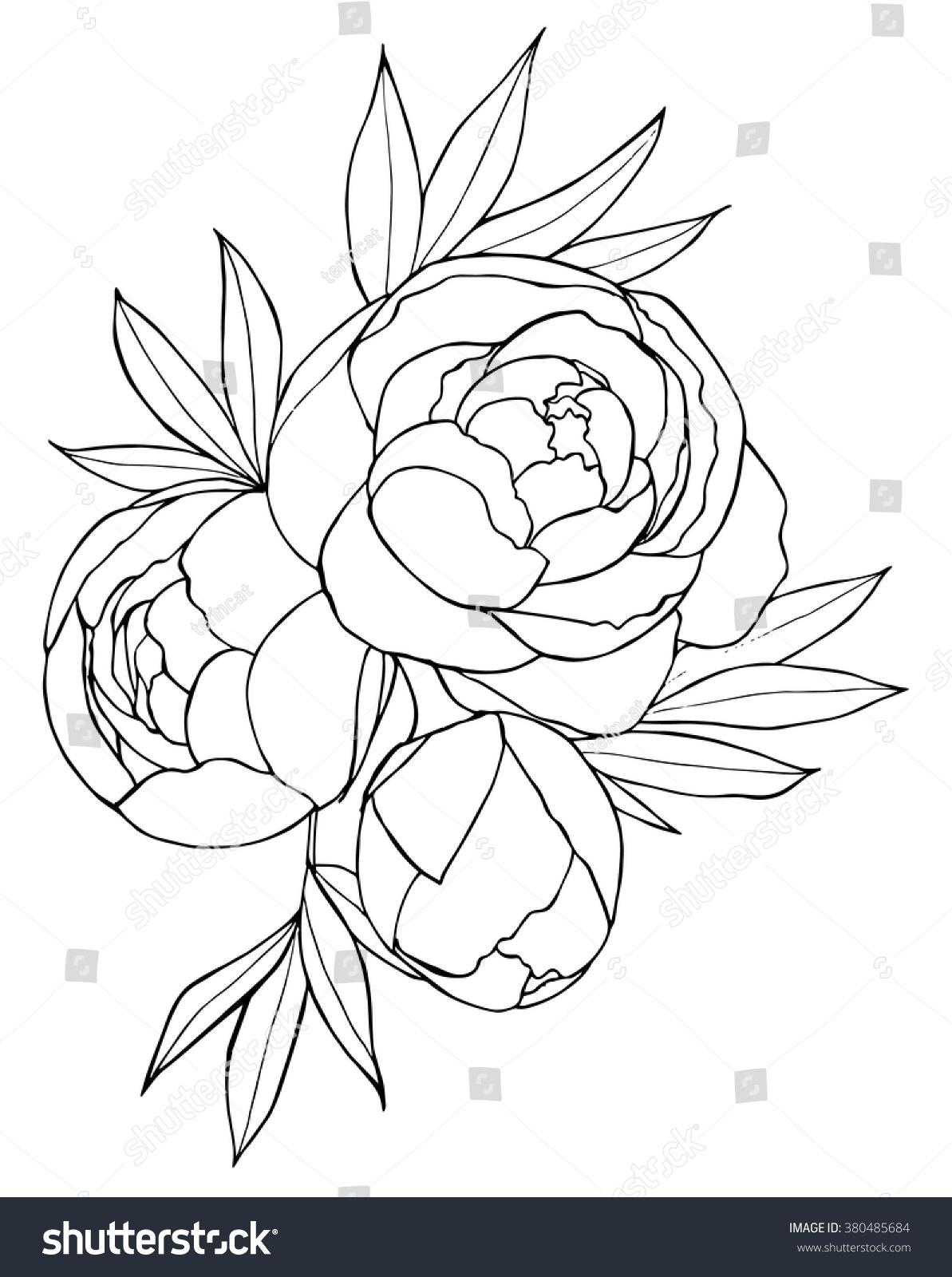 Black White Hand Drawn Illustration Peonies Stock Vector